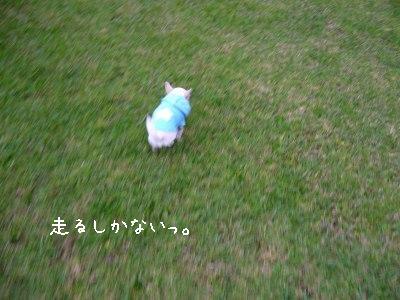 s-P1140429.jpg
