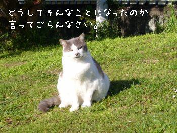 s-P1180395.jpg